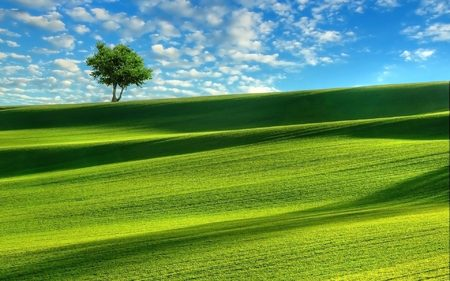 Rolling landscape of grass and tree